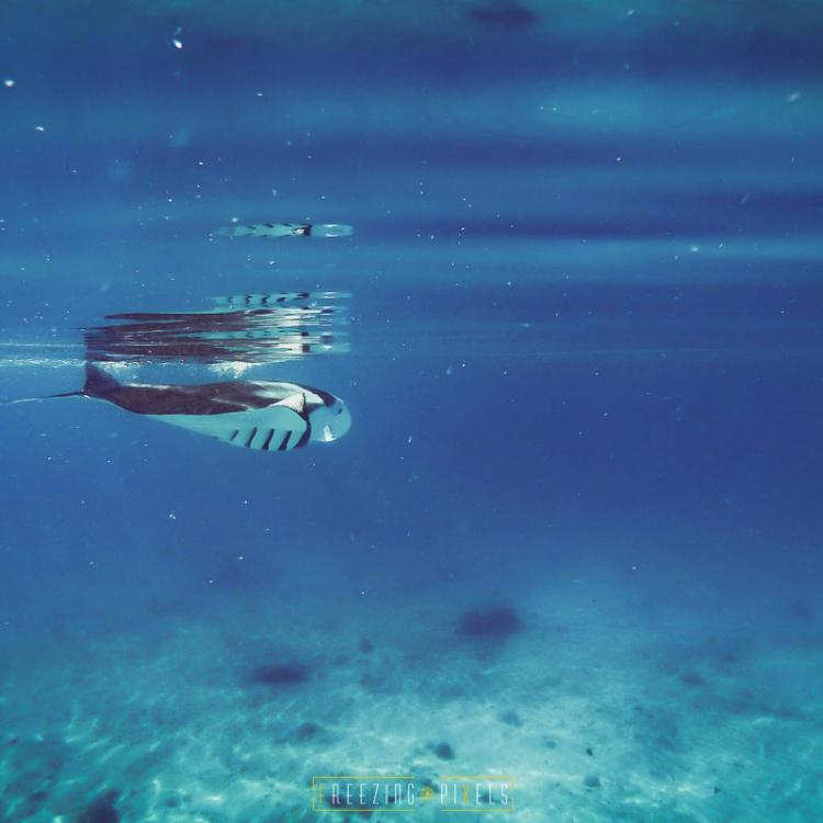 Freezing Pixels - Maldives Underwater