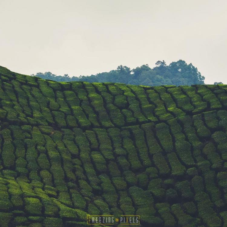 Freezing Pixels - Malaysia